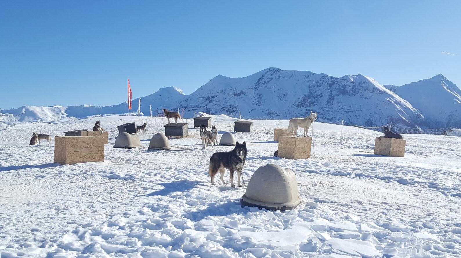 Campement des chiens