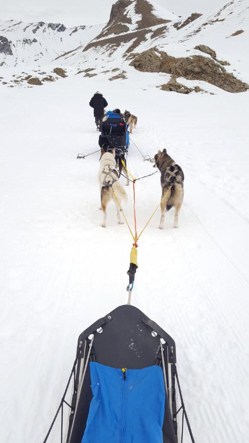 Apprentissage conduite attelage chiens de traineaux