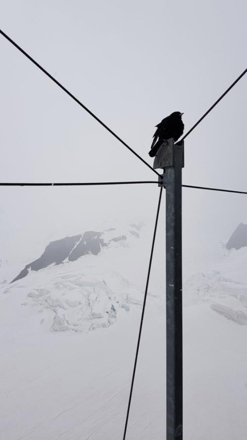 Glacier Jungfrau Oberland Bernois Valais