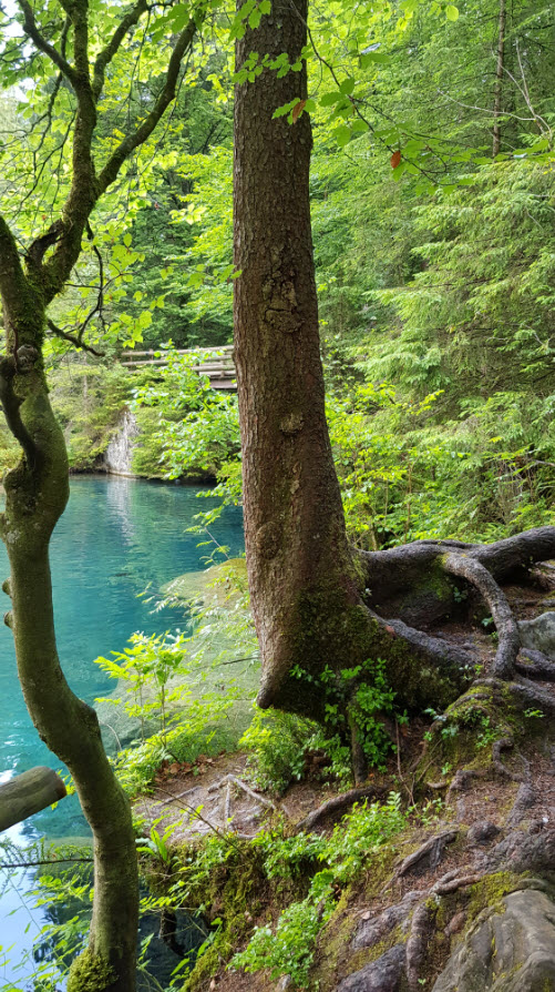 Lac transparent montagne Blausee Suisse