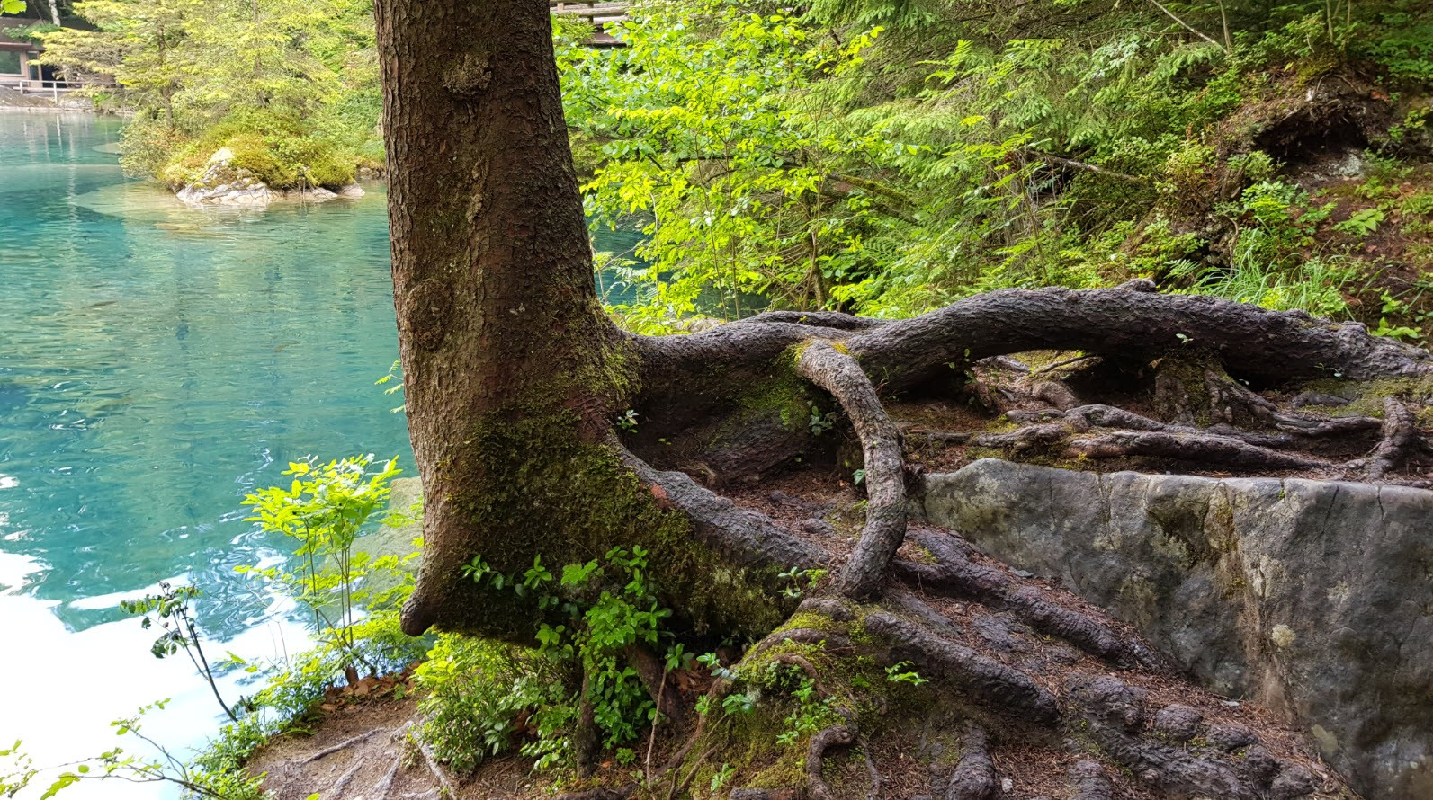 Blausee Oberland Bernois