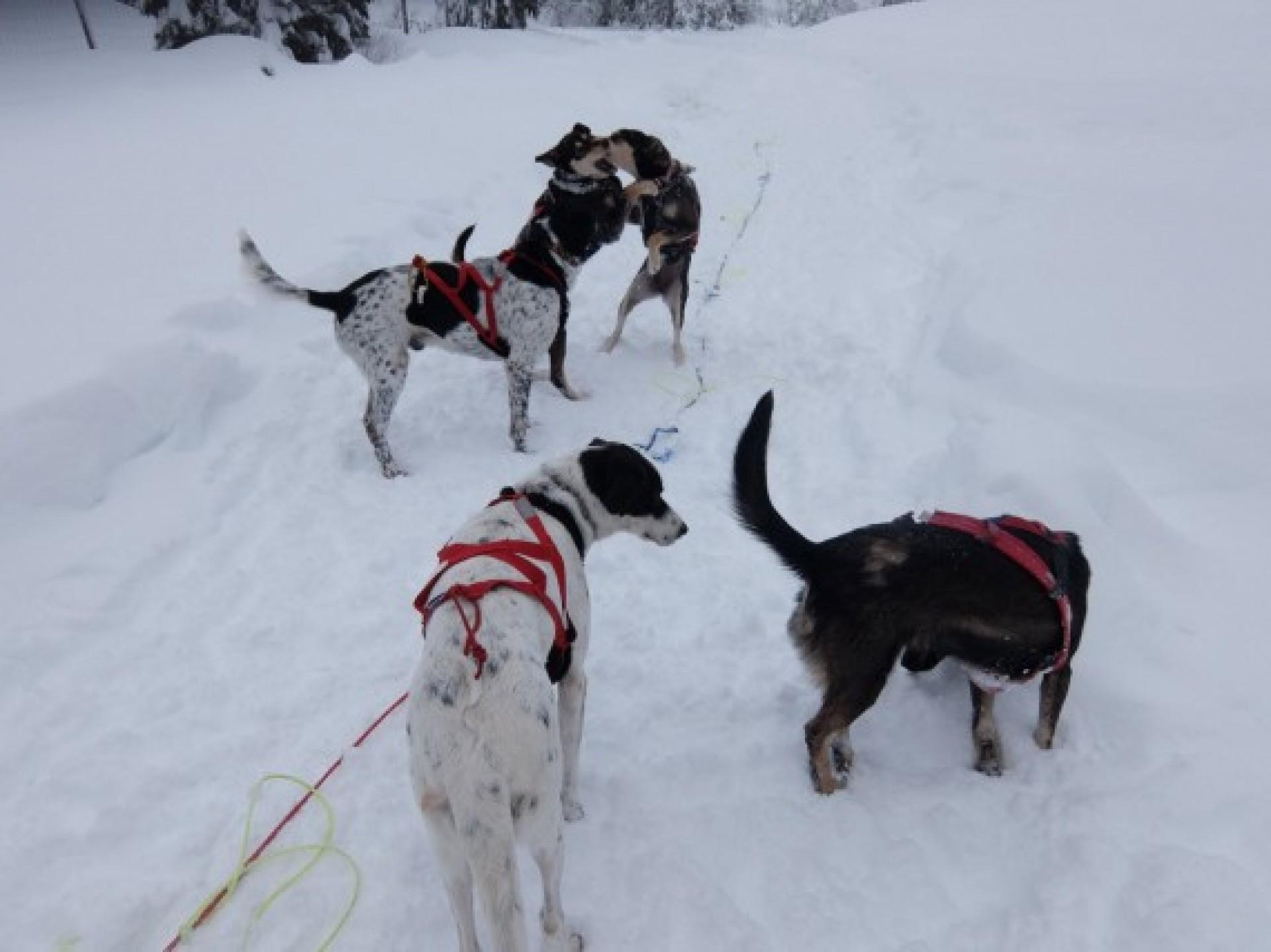 Balade en chiens de traineaux dans les montagnes du jura for Balade chien de traineau doubs